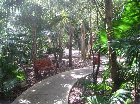 IBEROSTAR Paraiso Del Mar : Sentier pour se rendre d'un endroit a l'autre