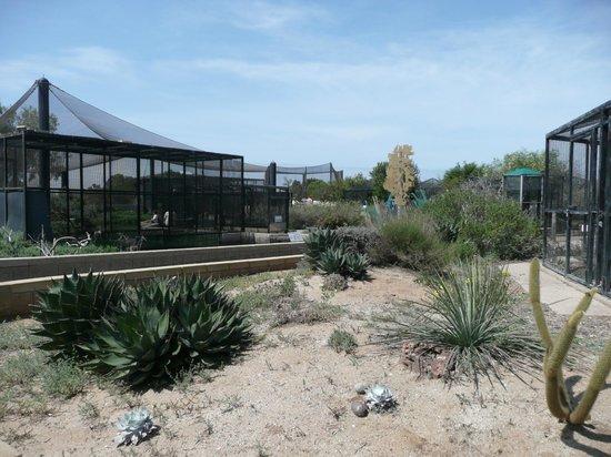 Living Coast Discovery Center: Aviary
