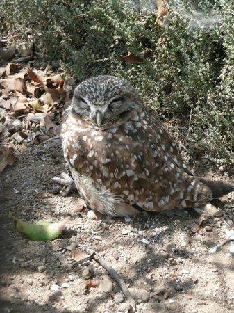 Living Coast Discovery Center: Cute burrowing owl