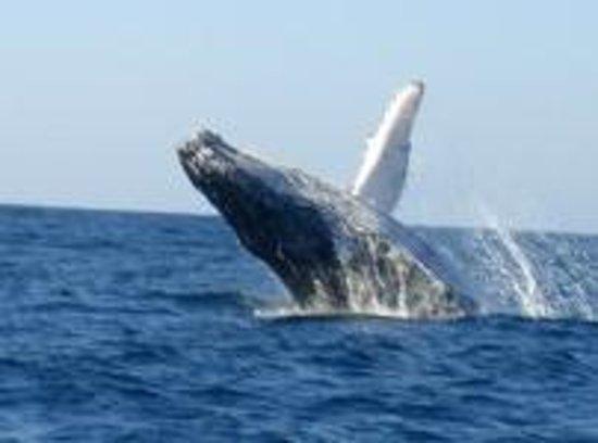 Barra Dive Resort : Ocean Safari