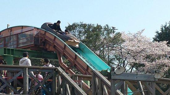 Toshimaen Amusement Park : さくら
