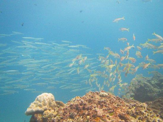 Local Dive Thailand: Fish