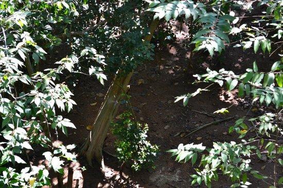 Forest Rock Garden Resort : area below