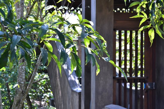 Forest Rock Garden Resort : entry gate to the room