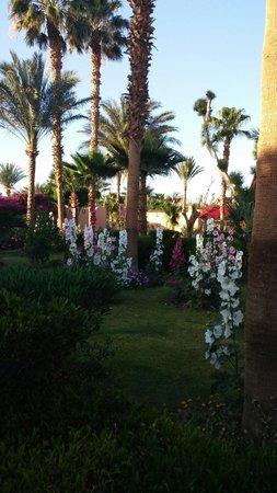 Giftun Azur Resort: Tuinen