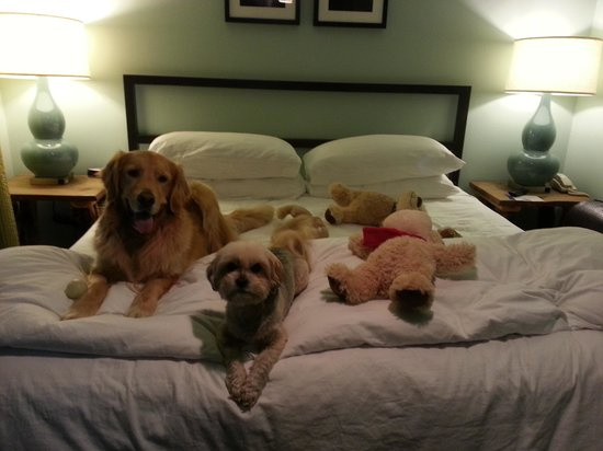 3 Peaks Resort & Beach Club: Pet Friendly!!!