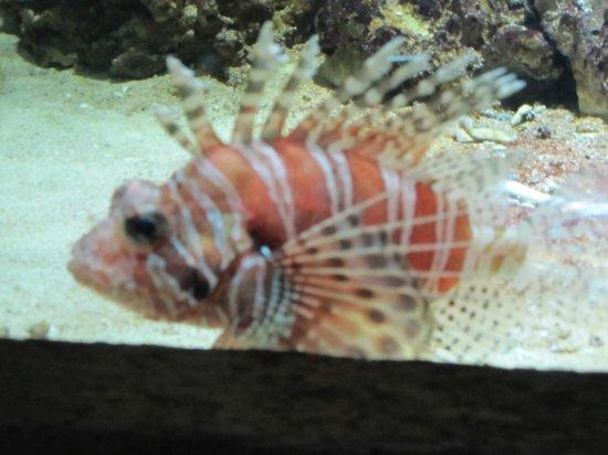 Emirates Park Zoo: Lion Fish