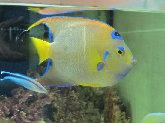 Emirates Park Zoo: fish