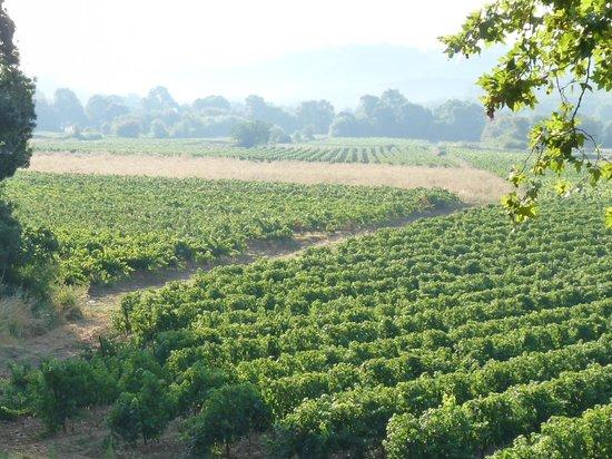 Domaine saint Dominique : La campagne environnante vue depuis la terrasse du petit déjeuner