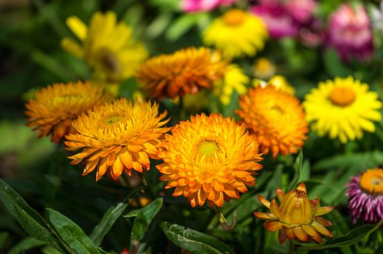 Flower Park Kagoshima