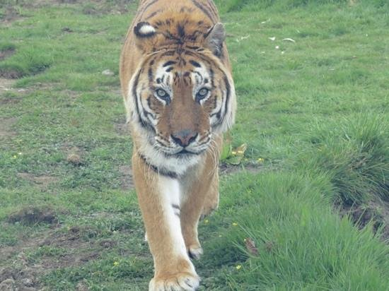 Woodside Wildlife Park: Tango
