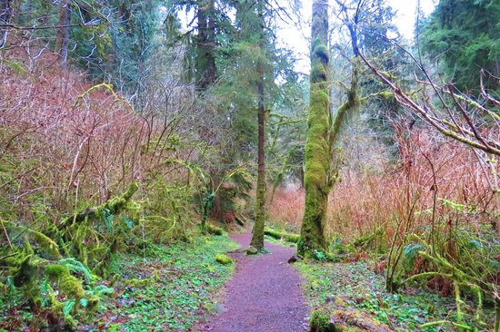 Munson Creek Falls: Easy Stroll