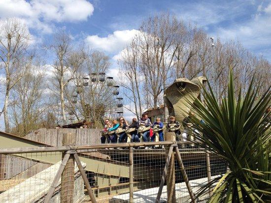 Chessington World of Adventures Resort : Kobra
