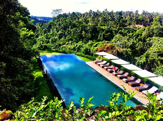 Alila Ubud: It speaks for itself. I took this at breakfast from the dining terrace. Bliss.