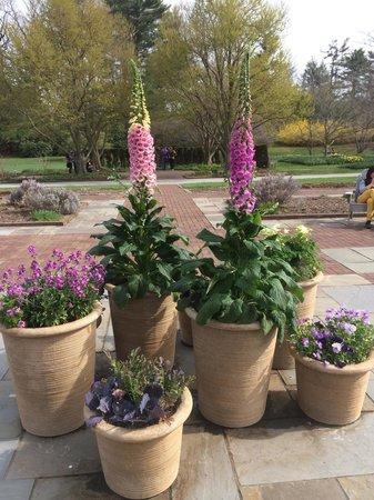 Longwood Gardens : Pots