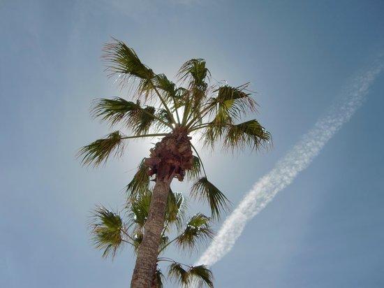 Villa Florida: Naturens egen parasol