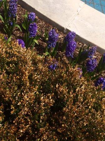 Longwood Gardens : Flowers