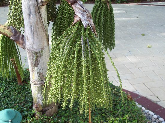 Luxury Bahia Principe Cayo Levantado Don Pablo Collection : Mon arbre préféré