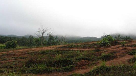 Khao Sok Paradise Resort : Uitzicht op olifant