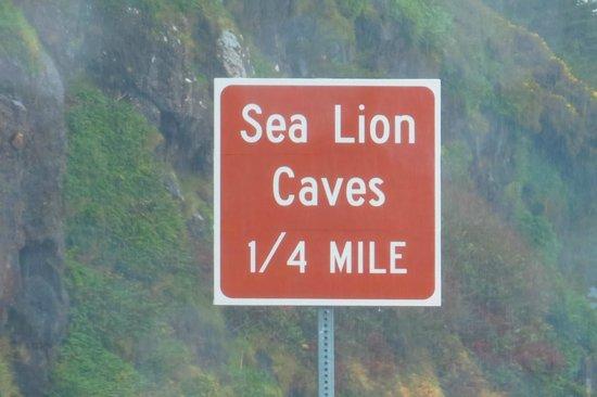 Sea Lion Caves: Free Views !