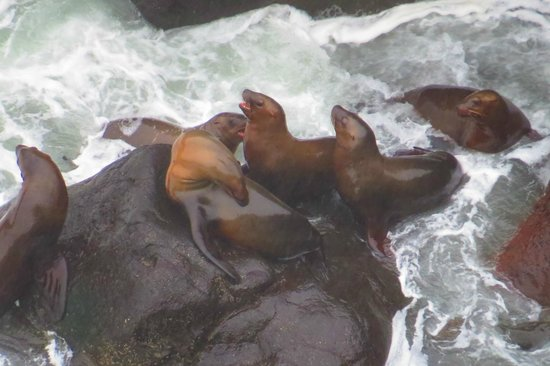 Sea Lion Caves: Your Next Buddy !