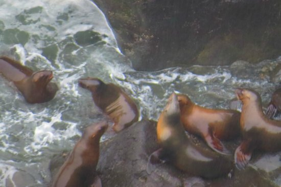 Sea Lion Caves: Bath Time