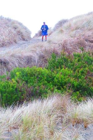 Oregon Dunes National Recreation Area : Good Sized Dunes