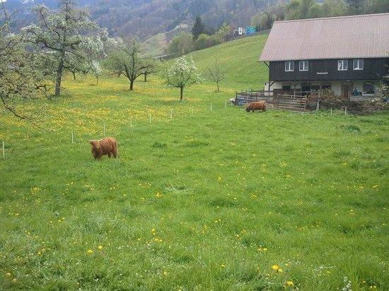 Boutique Hotel Schluessel : 이국적인 스위스 소와 목장