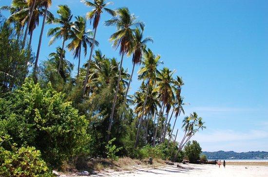 Wakatobi Hoga Diving: Bounty Island