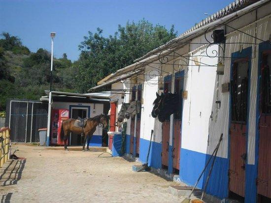 Centro Hipico Quinta da Saudade : stables