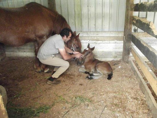 Centro Hipico Quinta da Saudade : 1 day old foal