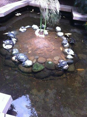 Lopesan Baobab Resort : Turtles