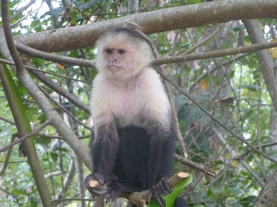 Bungalows Ache: Monkey in the hotel garden