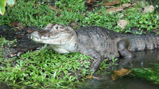 Los Lagos Hotel Spa & Resort: krokodillenfarm
