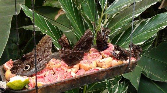 Los Lagos Hotel Spa & Resort: vlindertuin