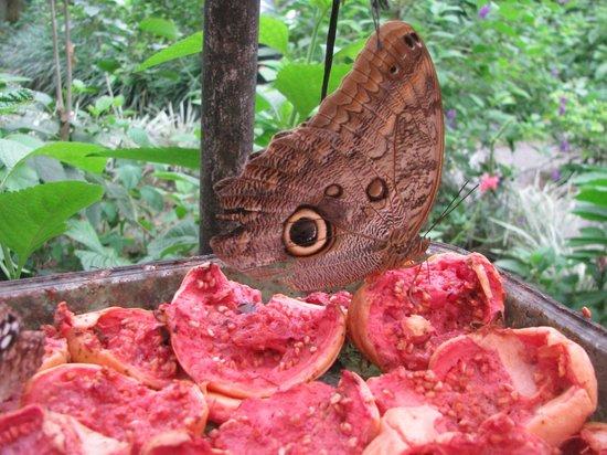 Los Lagos Hotel Spa & Resort : vlindertuin
