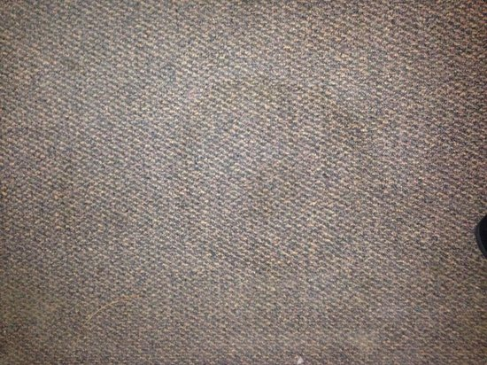 Nites Inn Motel & RV Park: A number of stains, room needs rug shampooing