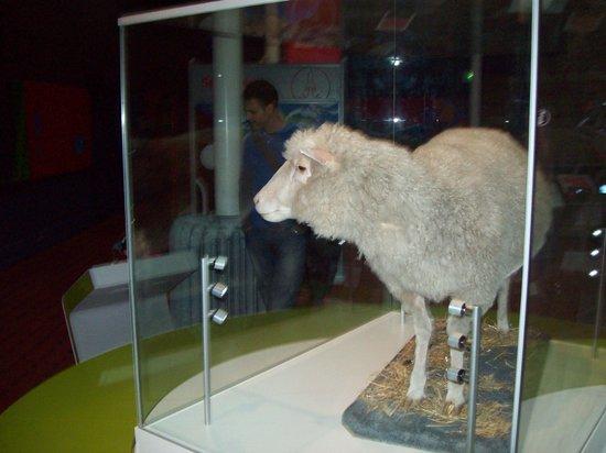 Museo Nacional de Escocia: The world-famous sheep Dolly