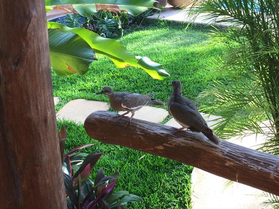 The Lodge at Uxmal: Doves Outside Room