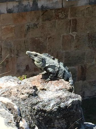The Lodge at Uxmal: Iguanas