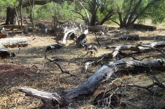 Ludlow Tuart Forest: Bushwalk