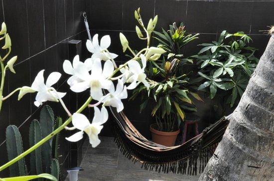 Hostal Mamallena: Garden