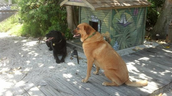 Island's End Resort: Auggie & Gunner enjoy the shade at Islands End