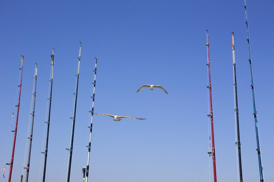 Black Rock Charters and Fishing: Hungry sea gulls