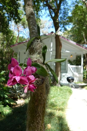 The Moorings Village: Orchid Cottage w/ grill & flower