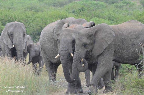 Thula Thula Exclusive Private Game Reserve and Safari Lodge: Ellies