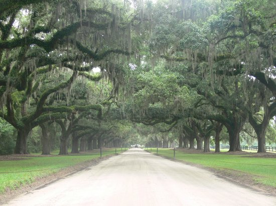 Boone Hall Plantation: Story book drive up to the house