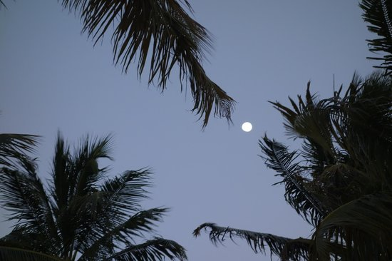 Morada Bay : Full moon through the palms