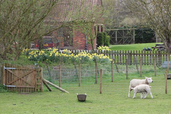 Low Costa Mill Cottages: Sheep!
