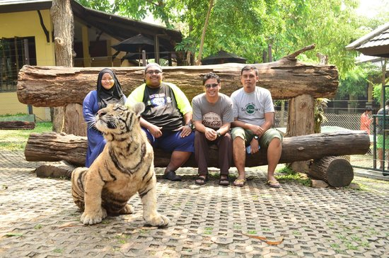 The Small Chiang Mai : Tiger Kingdom